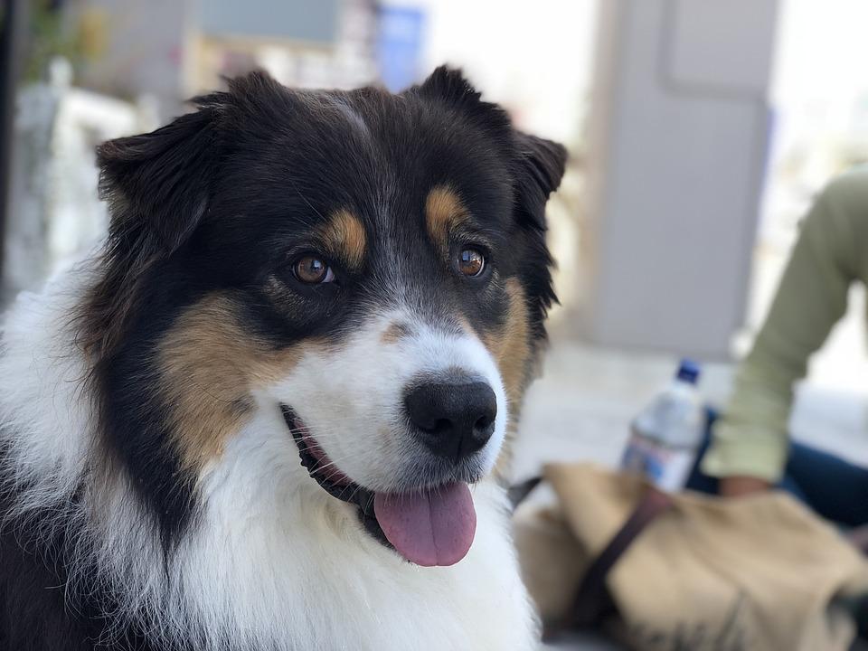 Happy dog copywriting service